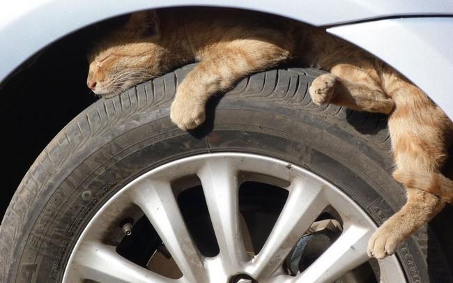 محل خواب گربه ها