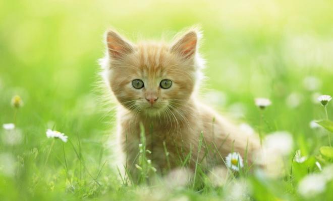 گربه ی زیبا