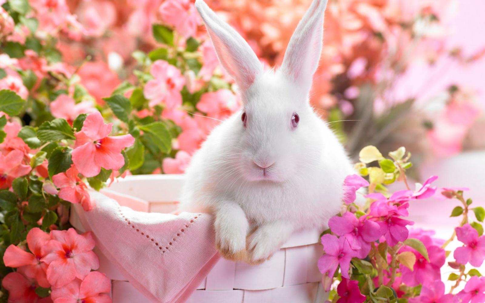 خرگوش زیبا در بهار