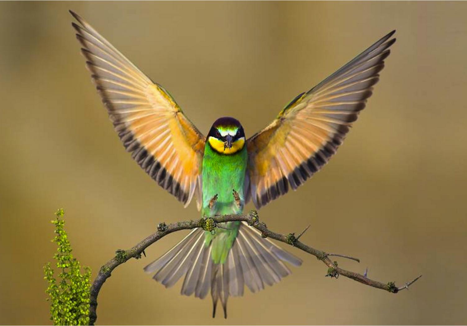در لحظه فرود پرنده