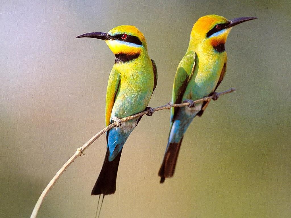 قهر پرندگان زیبا