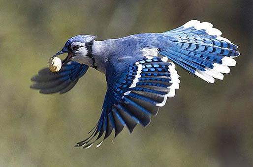 پرنده زیبا ولی گشنه