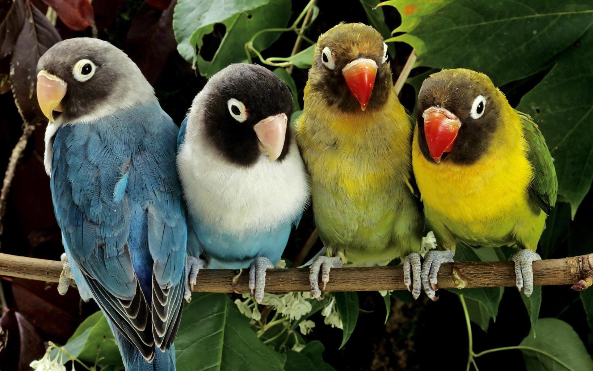 عکس دسته جمعی طوطی ها