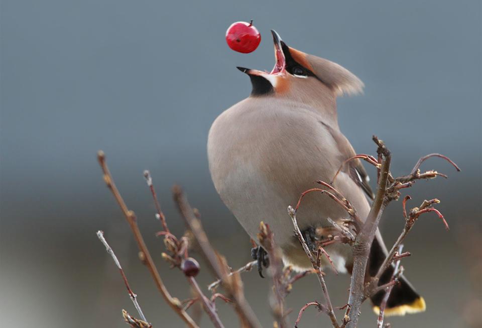 غذا خوردن این پرنده