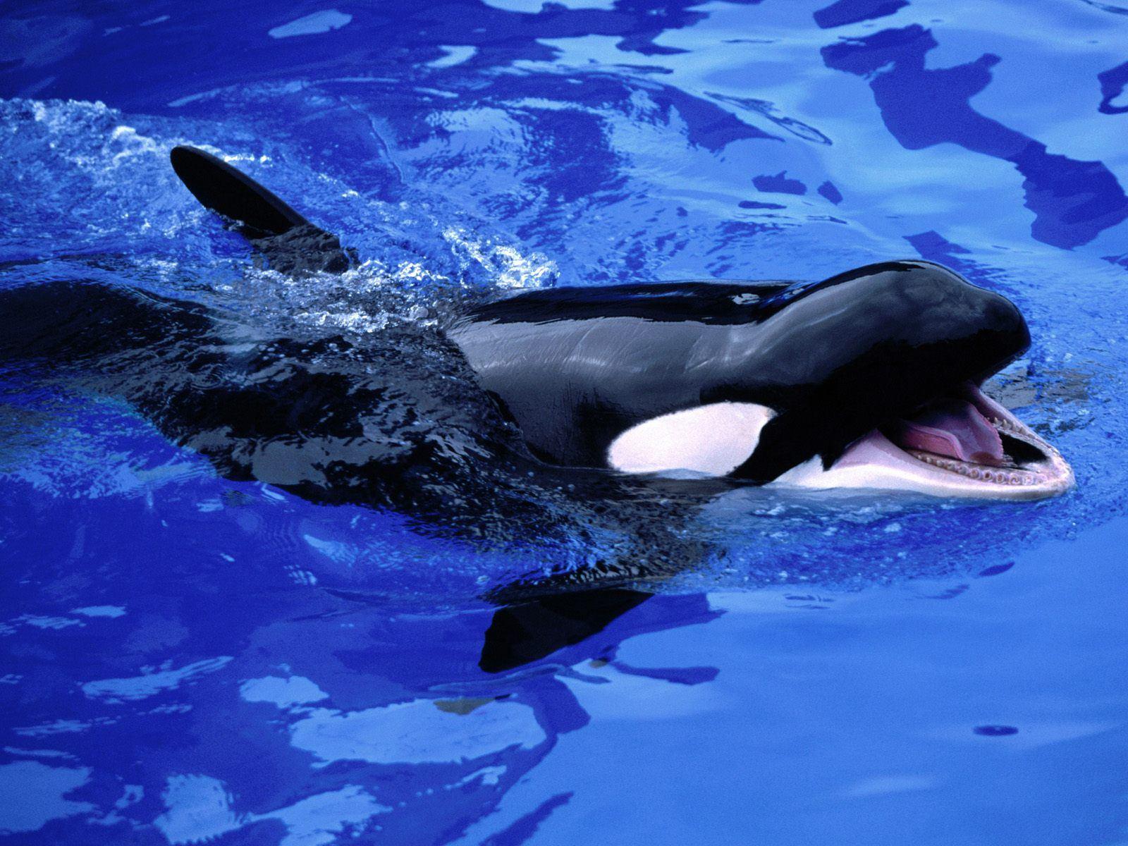 نهنگ گرسنه