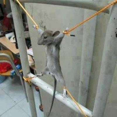 وقتی موش به خوابگاه پسرانه وارد میشه ...
