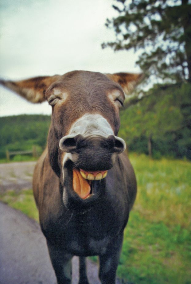 خر بخنده !!!