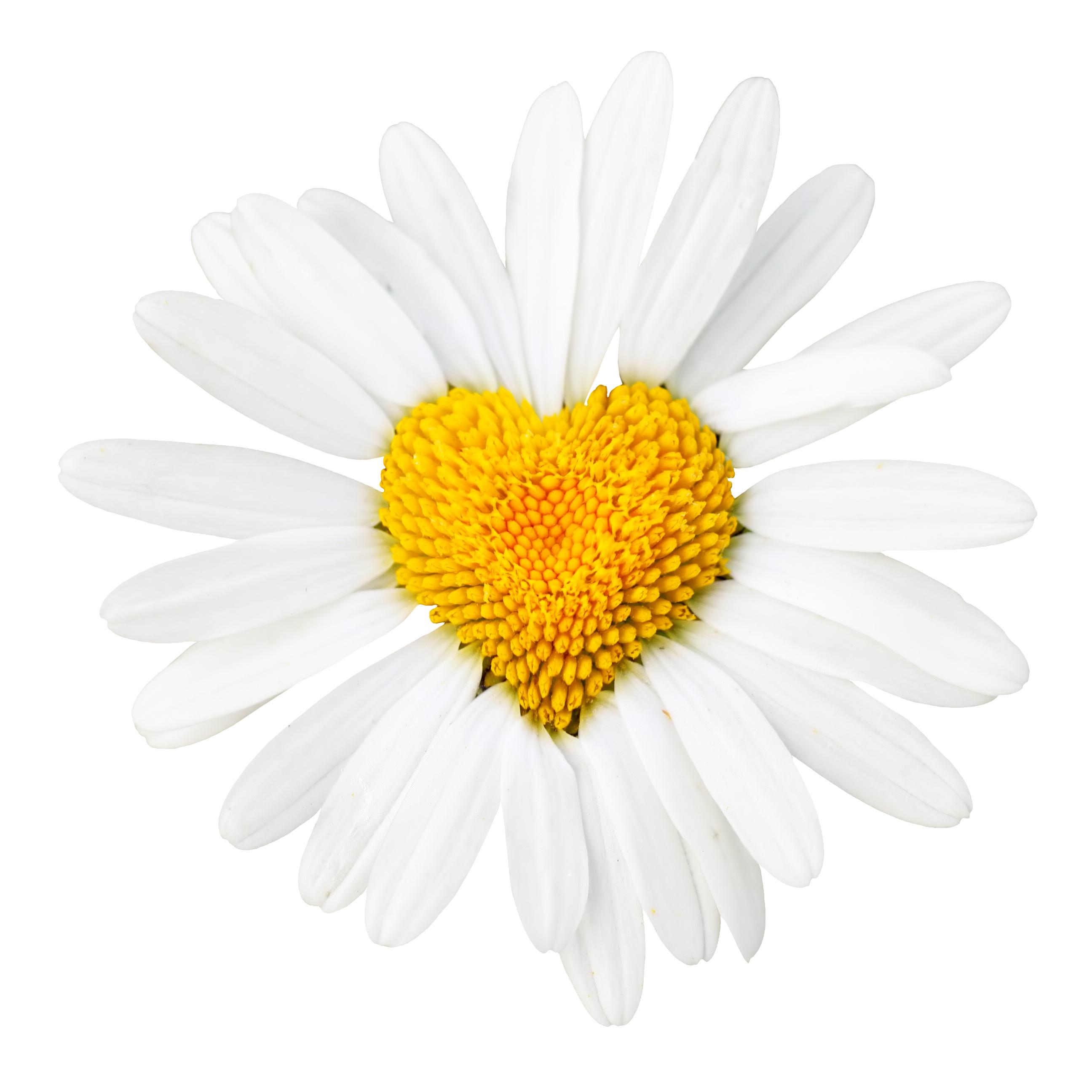 قالب در گل یاس
