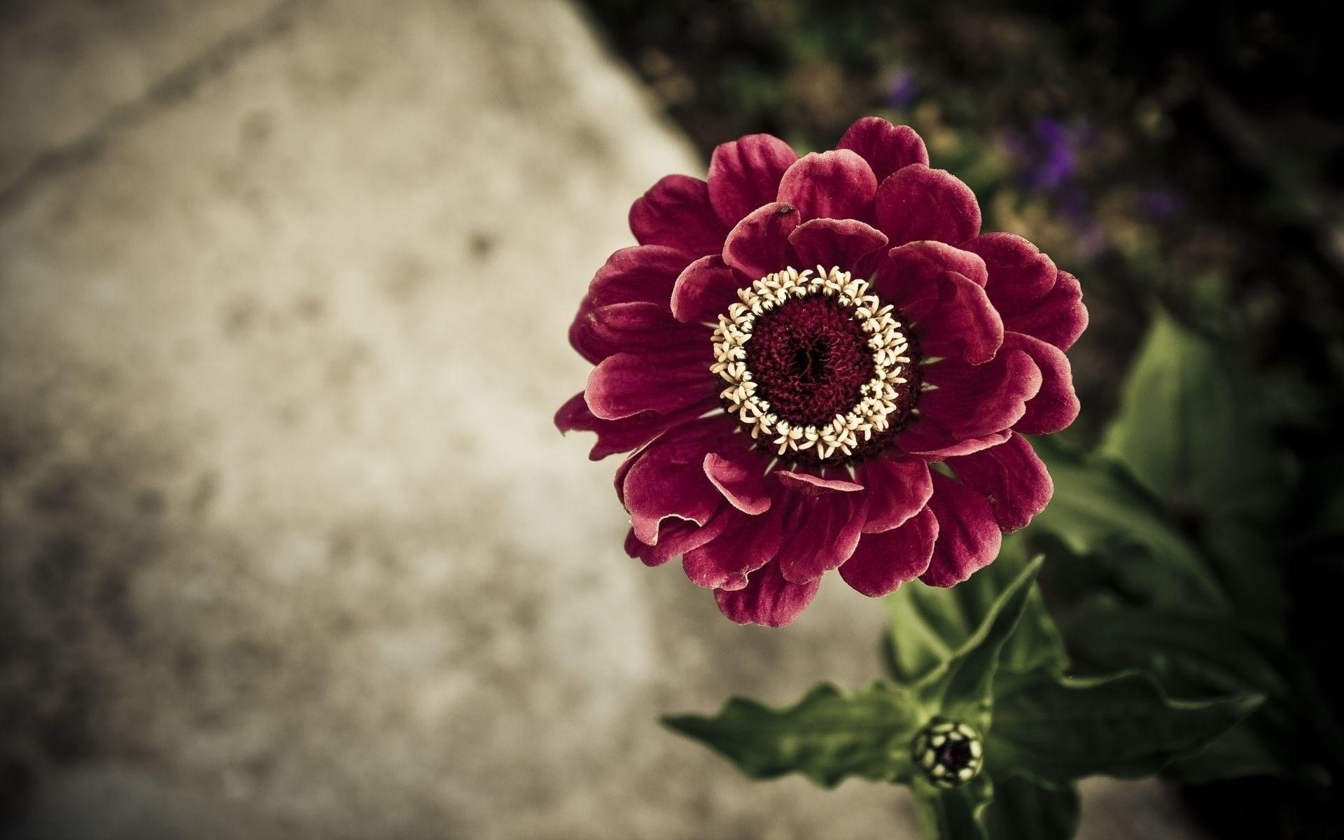 گلبرگ های گل
