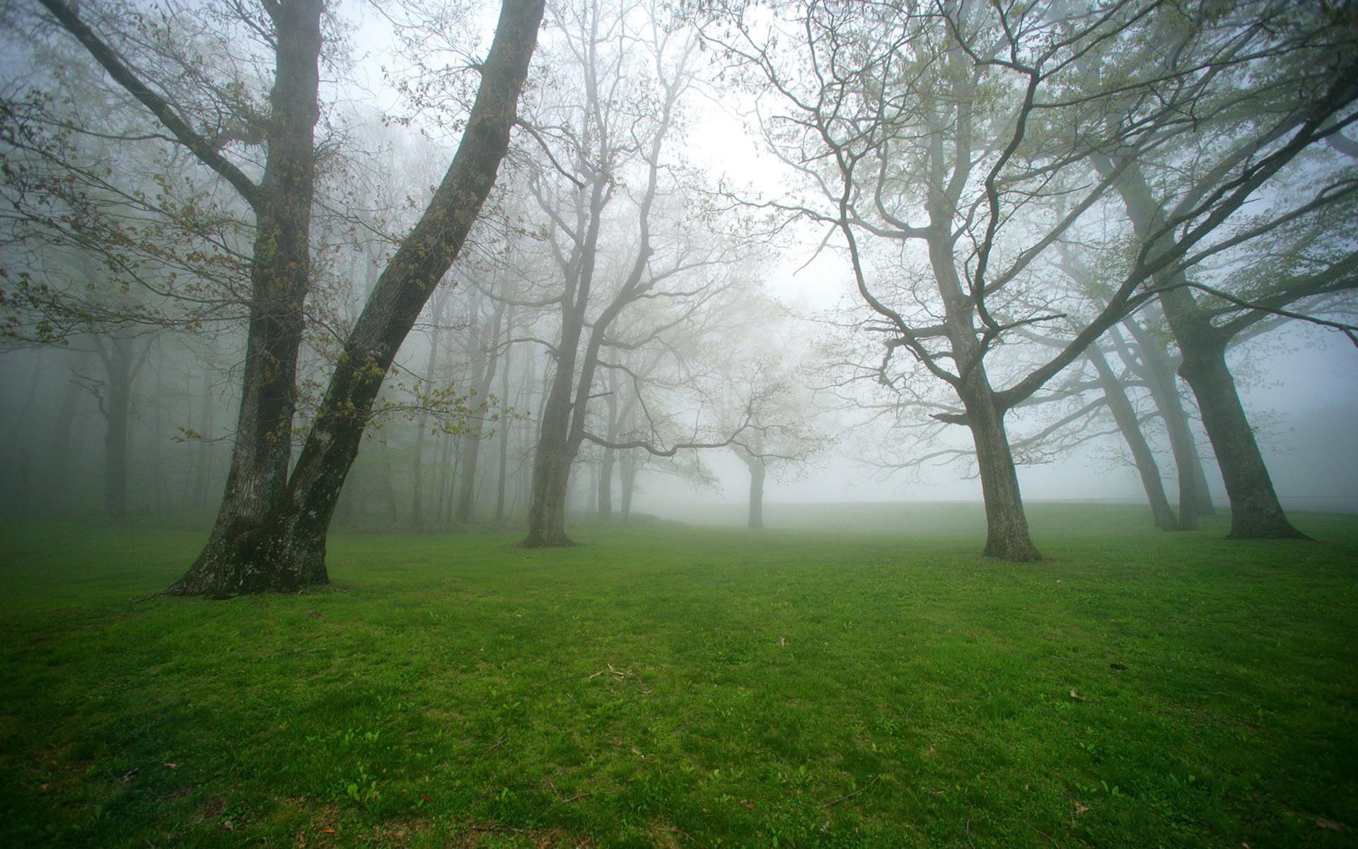 درختان مه آلود