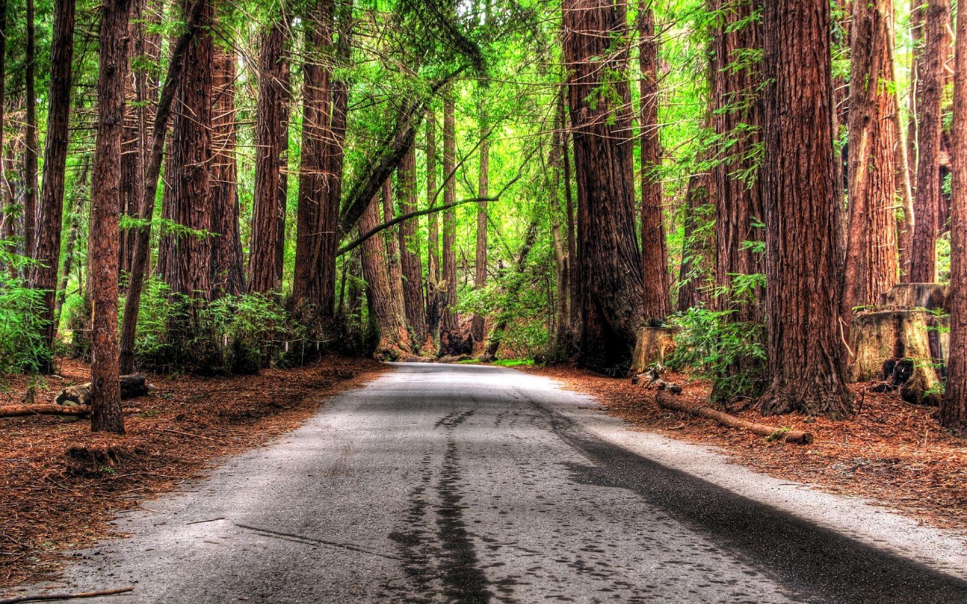 جاده ، طبیعت