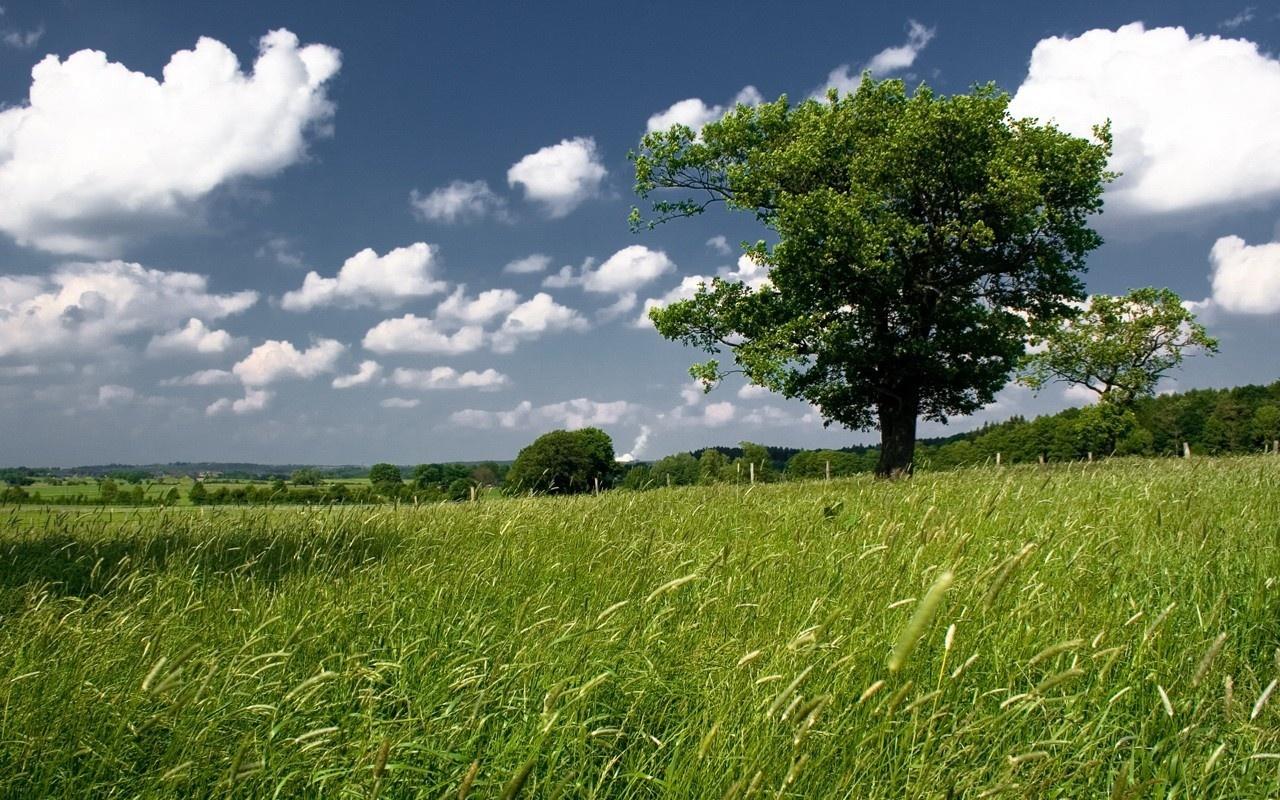آسمان و زمینه هایش