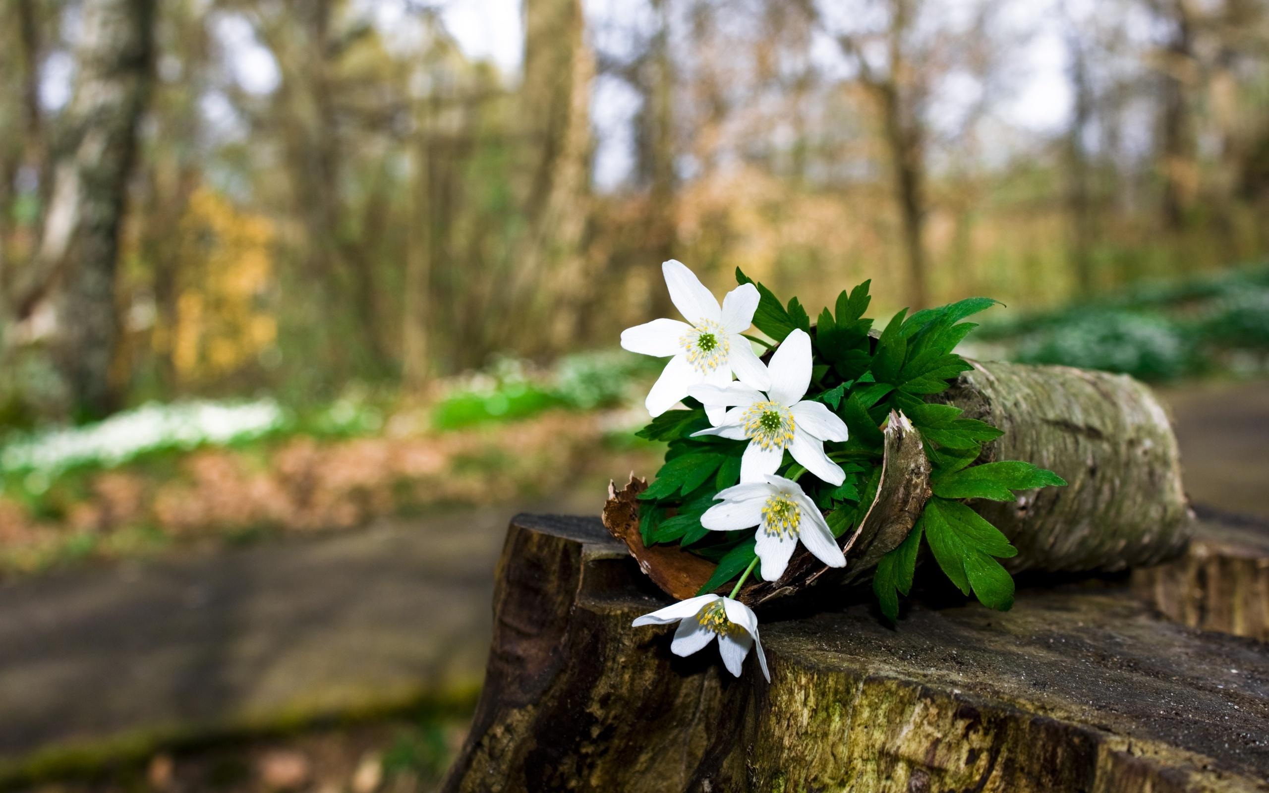 جنگل گل بهار