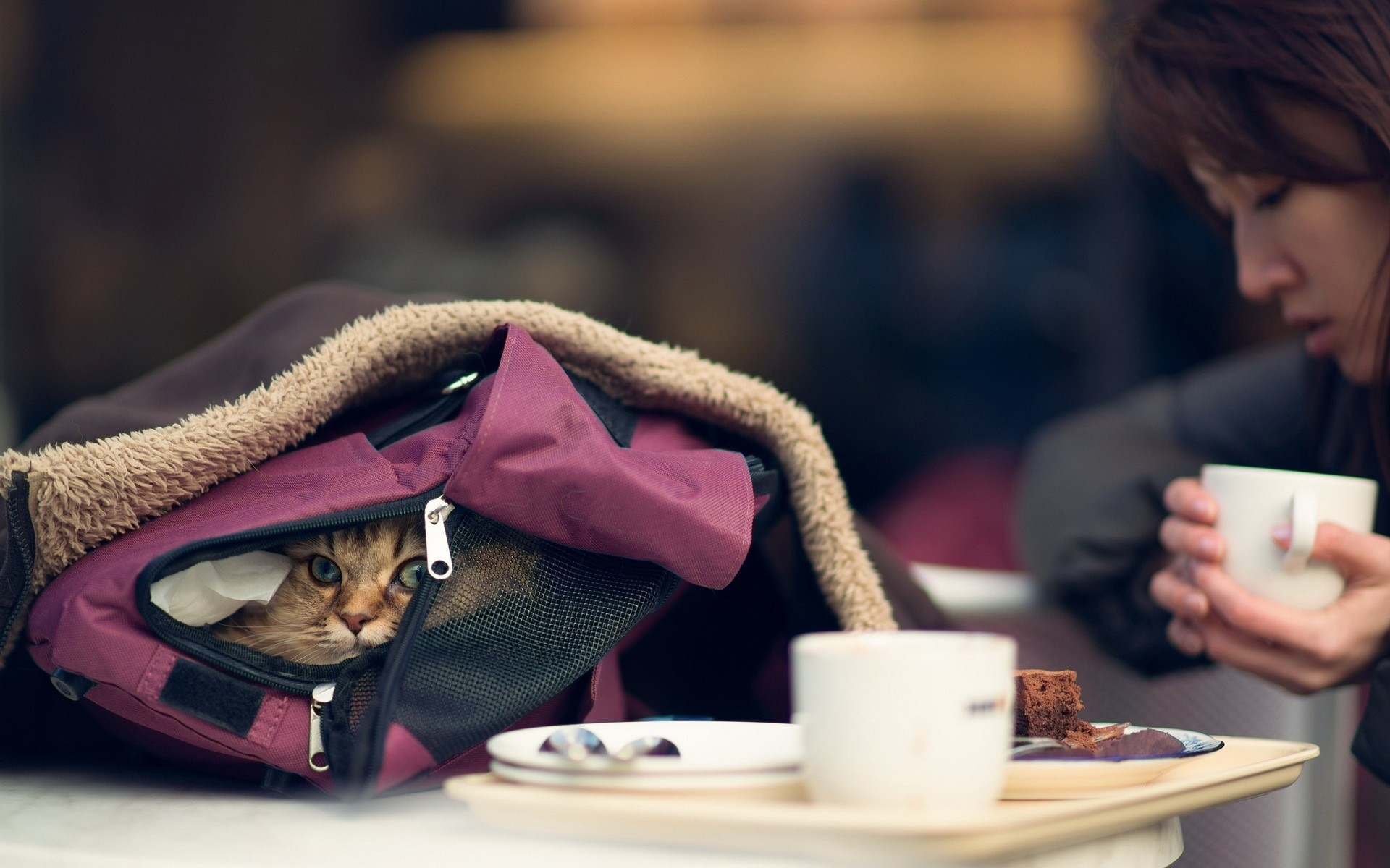 کیف گربه - bag cat
