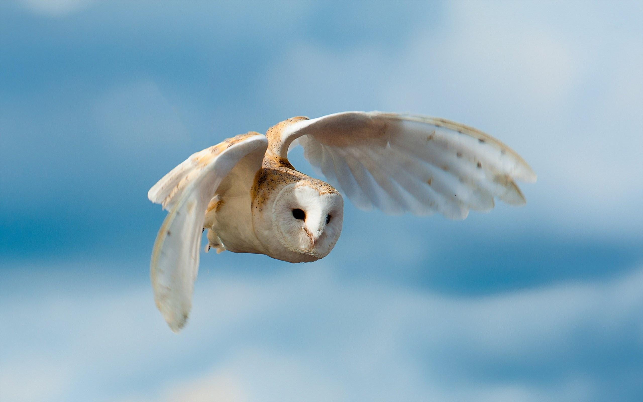 پرنده زیبا - جغد