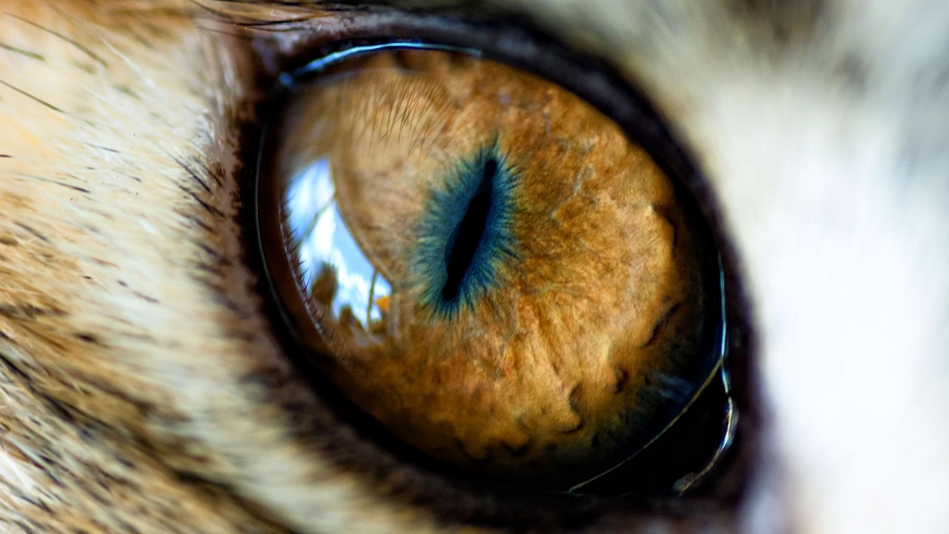 چشم گربه