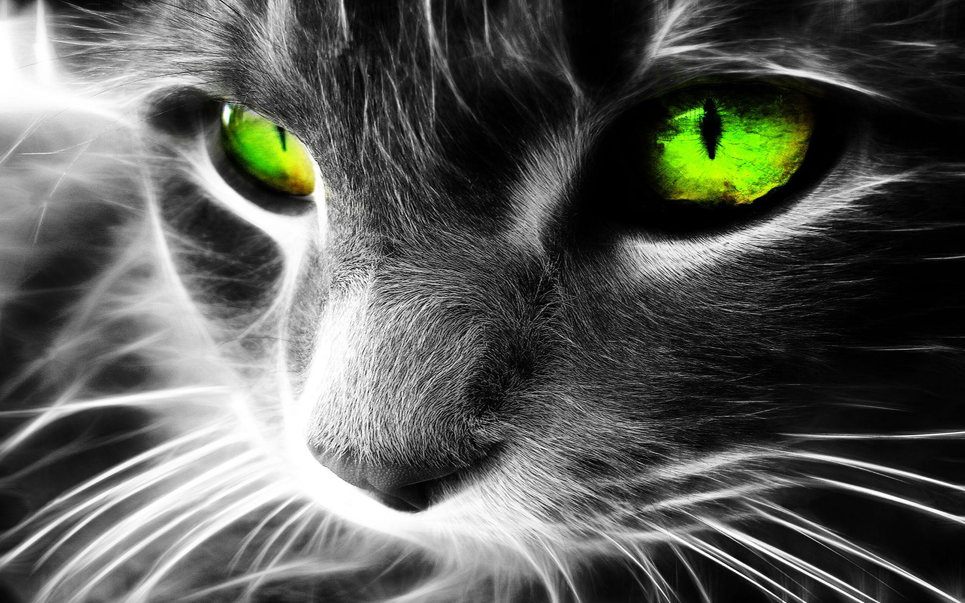 گربه سیاه با چشمان سبز