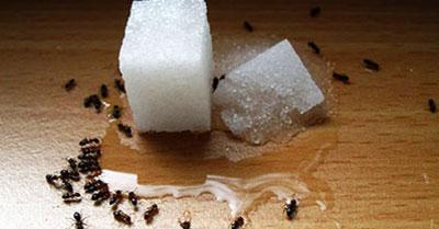 راه های مبارزه با مورچه ها درخانه