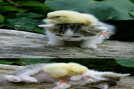 تصاویر و کلیپ های زیبا و خنده دار از دنیای حیوانات