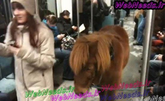 http://webneeds.ir/ |  کار بسیار عجیب یک دختر 20 ساله در مترو +عکس,دختران در مترو,دختران عجیب در مترو,کار دختران در مترو,دختر+عکس,دختر+عکس+مترو,عکس جالب,عکس های جالب,عکس های دختران,د,دختران در,عکس های مترو,دختران اروپایی,عکس دیدنی,عکس های دیدنی,عکسهای,عکس