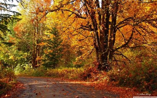تصاویری از فصل پاییز