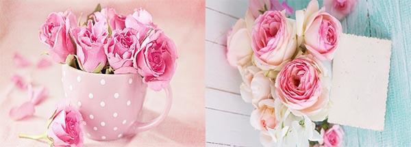 والپیپر های جدید از گل رز صورتی با کیفیت HD
