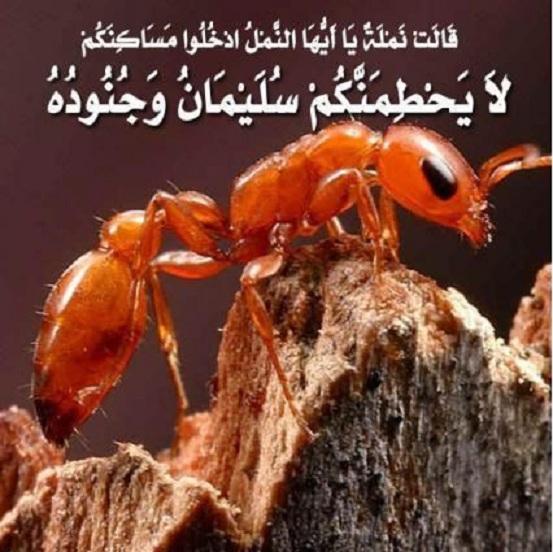 کشف یک اشتباه در قرآن!