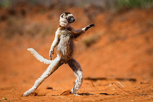 برندگان عکاسی کمدی حیاتوحش ۲۰۱۵