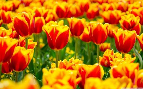 گل های زیبا (سری اول)