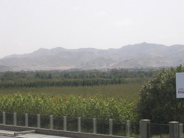 کاشت درخت در ۴٠ هکتار از اراضی باغ ملکآباد