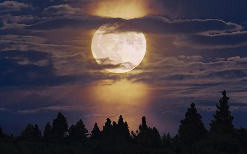 http://rozup.ir/view/1091073/Landscapes_trees_forest_moon_moonlight_skyscapes_1440x900.jpg