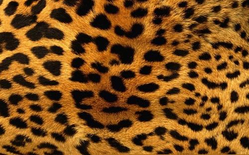 http://rozup.ir/view/1100188/animals_patterns_fur_leopard_print_1440x900.jpg