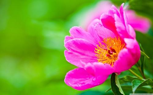 http://rozup.ir/view/1110233/flower_25-wallpaper-1440x900.jpg