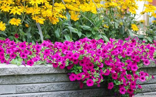 http://rozup.ir/view/1110236/moril_beautiful_flowers-wallpaper-1440x900.jpg