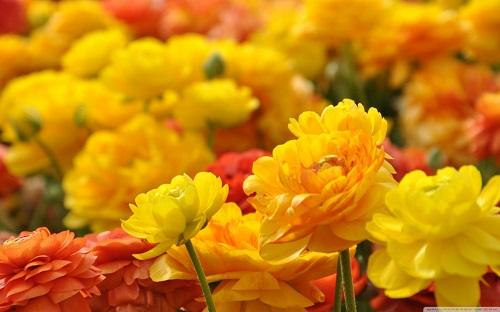 گل های زیبا (2)