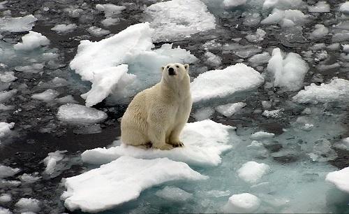 خرس قطبی (2)
