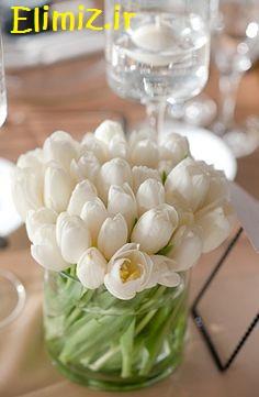 عکس گل سفید زیبا