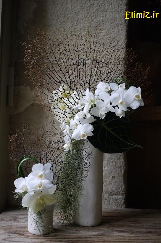 عکس گلهای خوشگل