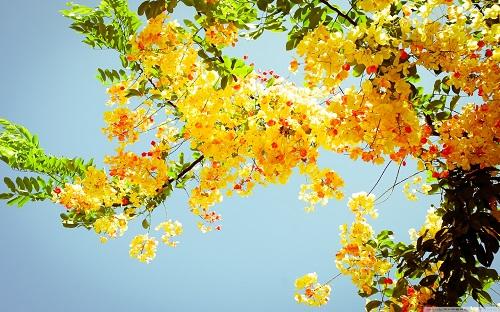 http://rozup.ir/view/1136833/beautiful_flowers_3-wallpaper-1440x900.jpg