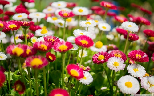 http://rozup.ir/view/1136838/colorful_daisies_flowers-wallpaper-1440x900.jpg