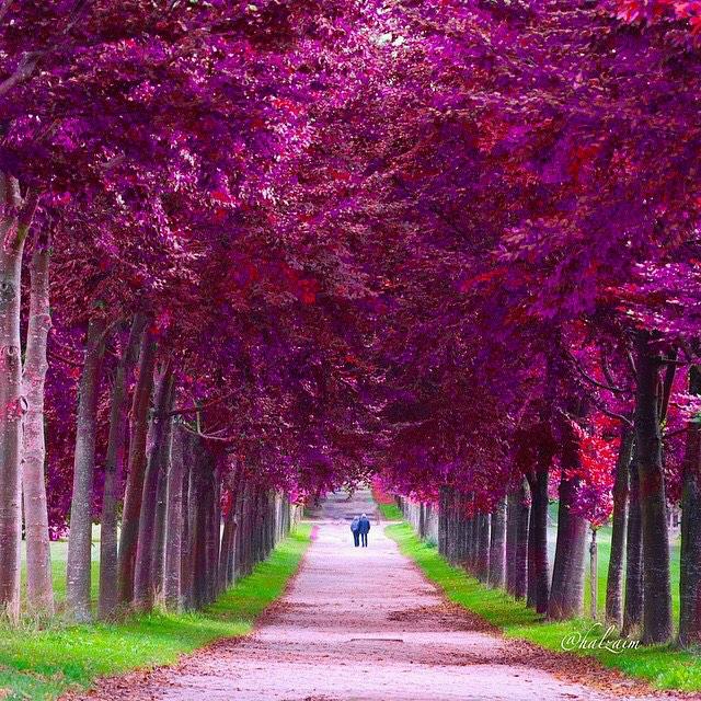 عکس جالب طبیعت