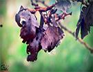 سری نهم عکس های زادگاه من با طبیعت - بهار 94
