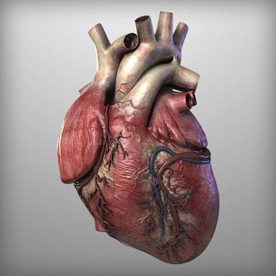واقعیت های خواندنی درباره قلب