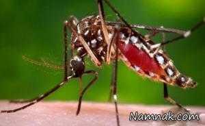 علائم ابتلا به بیماری زیکا
