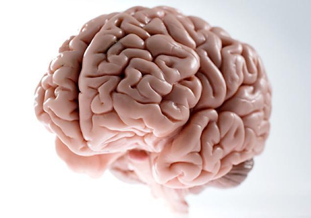 علت تاخورده و چروک بودن ساختار مغز چیست
