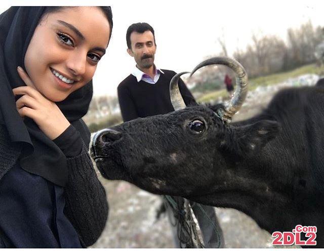 عکس منتشر شده از ترلان پروانه در کنار یک گاو!