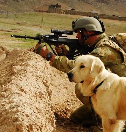 تصاویر جالب و دیدنی از زندگی سگ های نظامی