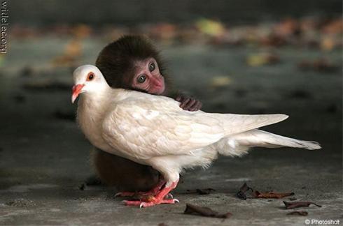 تصاویر طنز و دیدنی از حیوانات