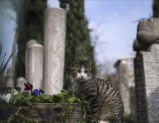 امام جماعتی که دوستدار گربه هاست!