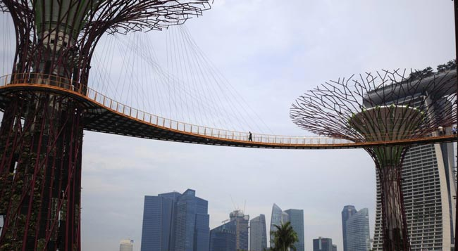 نمایی زیبا از پل هوایی درختی در سنگاپور/عکس